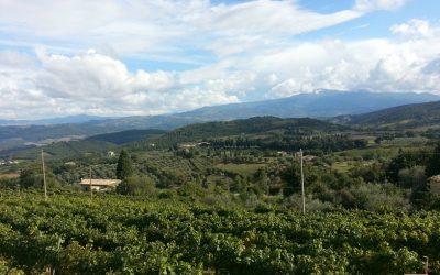 Montalcino stage Vinarius