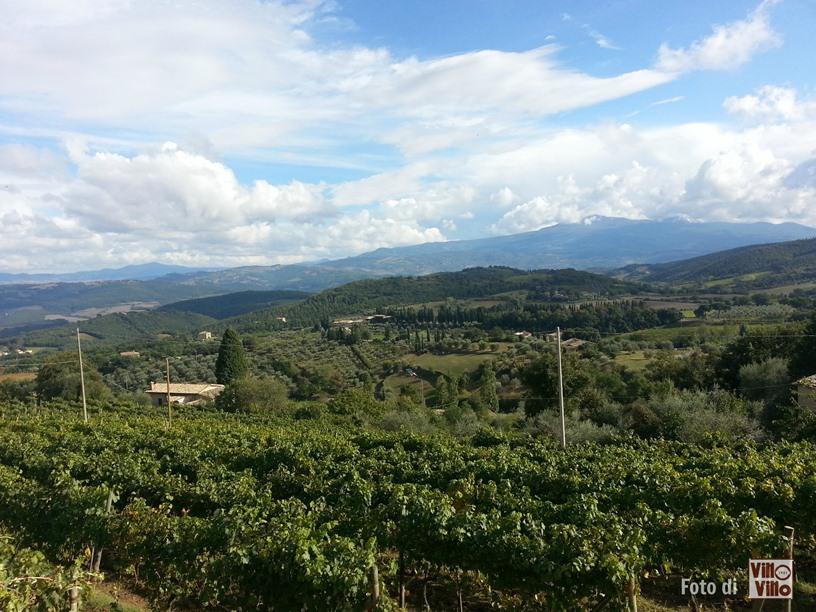 Protetto: Montalcino stage Vinarius
