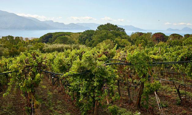 Il vitigno caprettone del Vesuvio